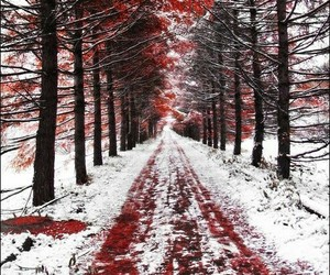 autumn, beautiful, and christmas image