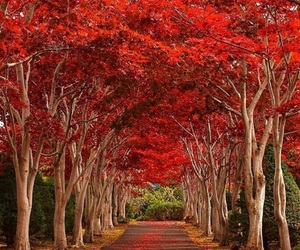 fall, japan, and leaves image