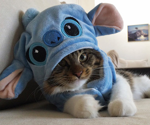 cat, animal, and stitch image
