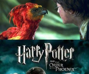 harry potter, funny, and order of the phoenix image