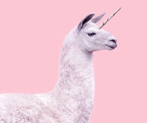 pink, unicorn, and animal image