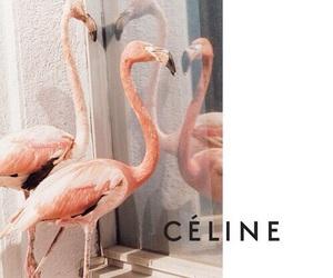 celine, fashion, and flamingo image