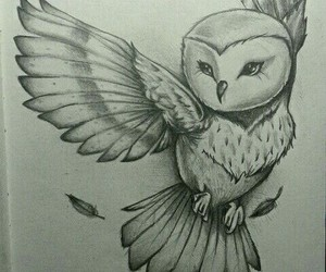 owl drawing and owl image