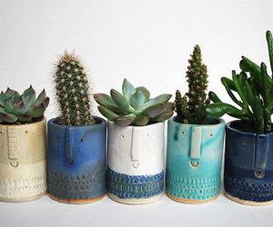 plants, cactus, and tumblr image