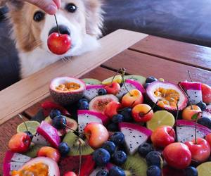 animal, cherry, and colours image