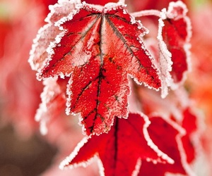 leaves, red, and winter image