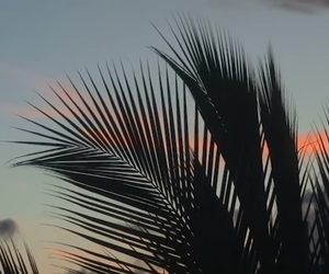 palm, sunset, and trees image
