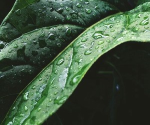 theme, green, and nature image