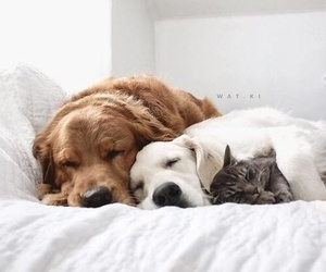 dog, animal, and cat image