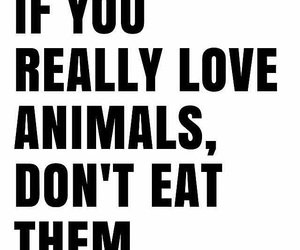 animals and vegan image