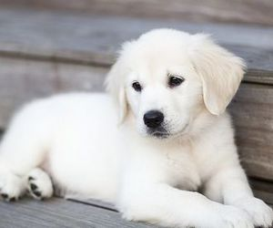 adorable, puppy, and animals image