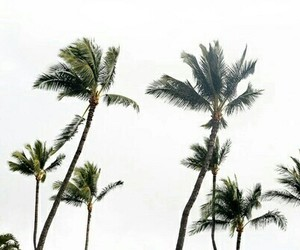 palms, photography, and pictures image