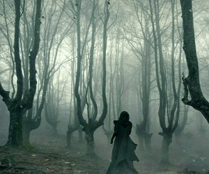 forest, dark, and witch image