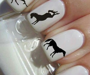 horse, nails, and animal image
