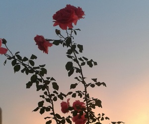 dawn, roses, and sky image