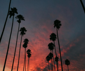 sunset, la, and los angeles image