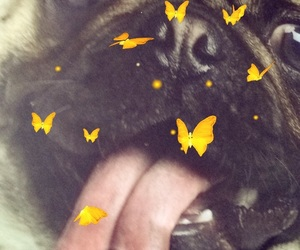 butterflies, cute, and pug image