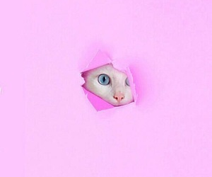 pink and cat image