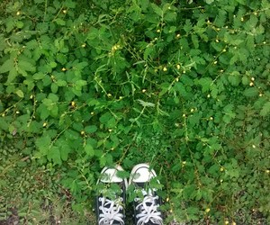 convers, green, and nature image