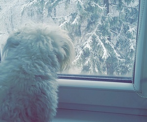 puppy, snow, and white image