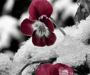 flowers and snow image
