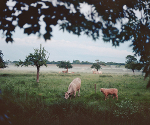 animals, cow, and landscape image