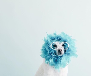 animal, this cute dog, and blue image