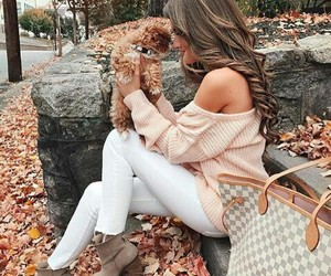 autumn, brown, and dog image