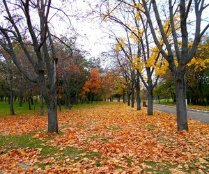 autumn, green, and leaves image