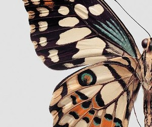butterfly, animal, and nature image