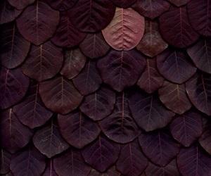 leaves, purple, and art image