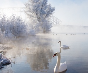 winter, Swan, and snow image