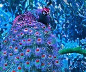Image by worldincolorpurple