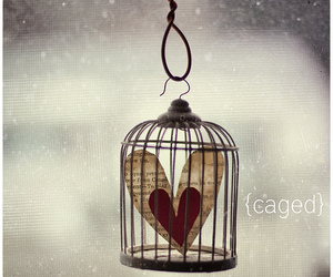 love and cage image