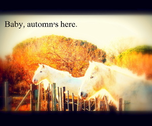 automn and poney image