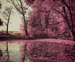 edited, forest, and pink image
