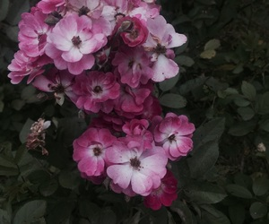 flower, pink, and grunge image