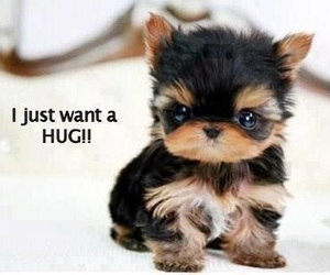 cute, hug, and puppy image