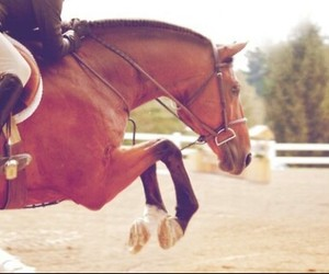 cavallo, horse, and jump image