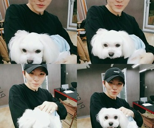 woozi, Seventeen, and svt image
