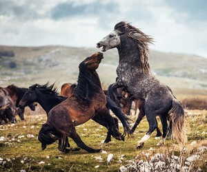 horses, jump, and nature image