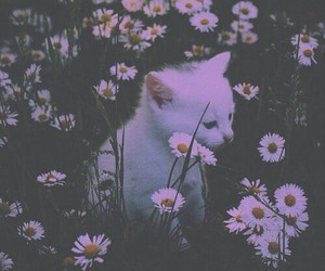 cat, pink, and tumblr image