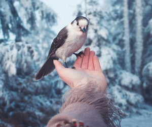 bird, winter, and snow image