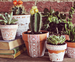 plants, lace, and cactus image