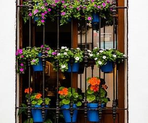 ventana, belleza, and flores image