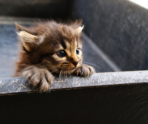 adorable, cool, and kitten image