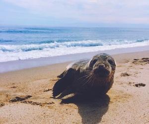 animal, beach, and ocean image