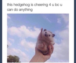 cute, hedgehog, and tumblr image