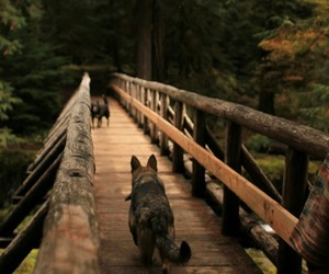 dogs, photography, and wood image