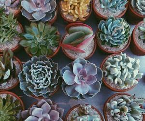 love plants vida image